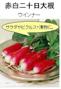 【世界の根菜】赤白二十日大根ウインナー/小袋