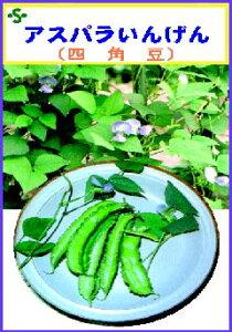 【世界の果菜】アスパラガスいんげん(早生琉球四角豆)/小袋
