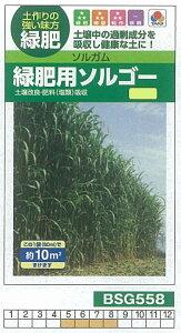【芝草・牧草】ソルガム 緑肥用ソルゴー[BSG558]/小袋(約10平方メートル)