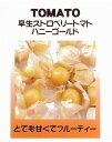 【世界の果菜】早生ストロベリートマト ハニーゴールド(食用ホオズキトマト)/小袋