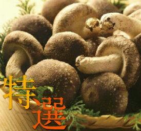 妙義 ナバファーム【特選】 椎茸 (しいたけ)1kg
