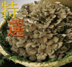 妙義ナバファーム【特選】舞茸(まいたけ)1株(約500g)