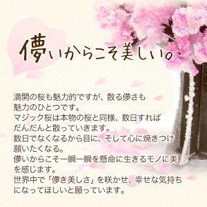 Magic桜マジック桜海外へのお土産にmagicsakuraマジックツリーシリーズ手作りで作る桜の木【おとぎの国】