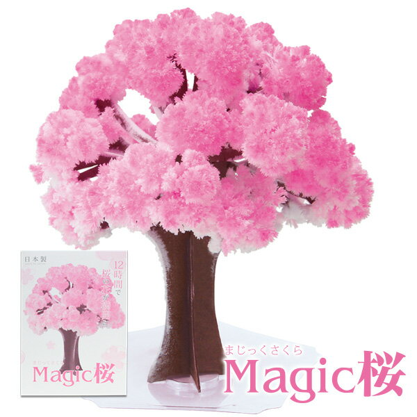Magic桜 マジック桜 海外へのお土産にmagic sakura エア花見 マジックツリー手作りで作る桜の木【おとぎの国】