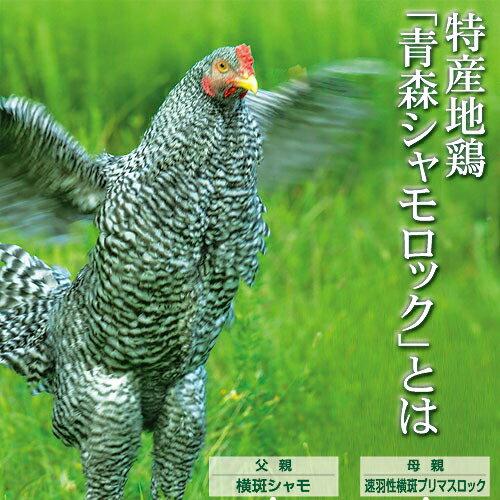 シャモロック 青森県銘地鶏 丸鶏(チルド)約2〜2.5Kg 1羽【送料込 産直品につき同梱不可、代引き不可】