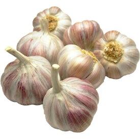 アイユローズ(ピンク大蒜)フランス産 約1KgAil Rose de Lautrec 毎週金曜日入荷