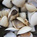 殻付ハマグリ冷凍500g(パック16〜20入)殻つき はまぐり パエリア 海鮮ラーメン 蛤ごはん 海鮮パスタ 蛤の酒蒸し