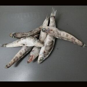 メヒカリ 冷凍 頭付 1本もの 20-25尾入り 500g 宮城県産