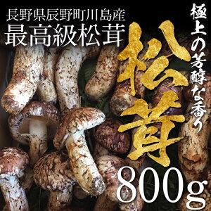 【販売開始】松茸 まつたけ 国産 800g 8〜16本 マツタケ 長野 産地直送 冷蔵 送料無料