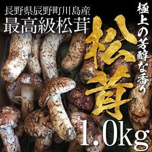 【販売開始】松茸 まつたけ 国産 1kg 10〜20本 マツタケ 長野 産地直送 冷蔵 送料無料