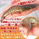 カウアイシュリンプ 1kg 1尾30〜40g ハワイ生まれの刺し身グレードのプリプリ有頭エビ バナメイエビ