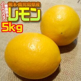 ポイント5倍 あす楽 無農薬レモン 5kg 防カビ防腐剤ワックス不使用 わけあり 国産レモン 熊本県産 送料無料