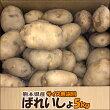 熊本県産ばれいしょ5kg【サイズ無選別】