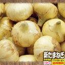 【わけあり】【送料無料】熊本県産 新たまねぎ 10kg【サラたま】【玉ねぎ】【玉葱】