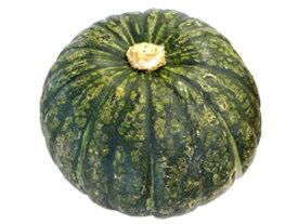 九州産 かぼちゃ1個 南瓜