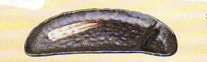 【美濃焼】一引(黒) 仕切 さんま皿 さんま/サンマ/秋刀魚/秋/七輪/大根おろし/大根/ダイコン/かぼす/カボス/明石家さんま/祭り/秋祭り/モミジ/紅葉/もみじ/紅葉/炭/魚/月見/収穫祭/新米/