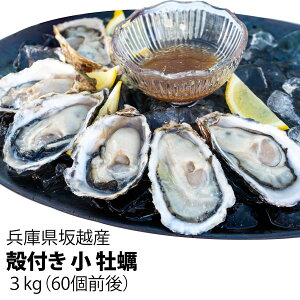 【ぷりっぷりで新鮮!】坂越産 殻付き 小 牡蠣 3kg  [送料無料](Sサイズ ~60個前後~)生食OK★牡蠣の美味しいシーズン到来!旨みたっぷり、甘くて濃厚♪坂越 スーパーセール 生牡蠣