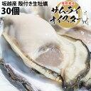 【ぷりっぷりで新鮮!】坂越産 殻付き牡蠣30ヶ [送料無料]生食OK★熱を加えても縮まない!臭みがなく食べやすい牡蠣♪…