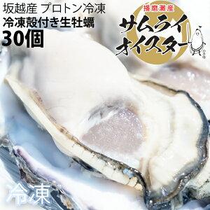 ★大粒新鮮冷凍サムライオイスタ?★坂越かき 冷凍殻付牡蠣30個(加熱用)[送料無料]驚きのぷりぷりで美味しい牡蠣♪熱を加えても縮まない魔法の牡蠣。