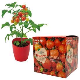 ハートマト 栽培キット ミニトマト 栽培セット 野菜栽培 栽培キット かわいい