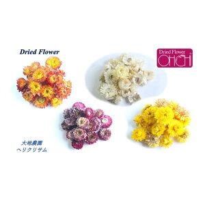 大地農園 プリザーブドフラワー ヘリクリサム 15g 全5色ドライフラワー 花材 ハーバリウム プリザ