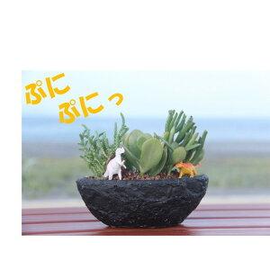 多肉植物 寄せ植え【ブラックボード】多肉の宝石箱 プレゼント ギフト オシャレ かわいい 新築祝い 開店祝い 開業祝い 周年記念 引越し祝い 移転祝い 退職祝い 敬老の日 お祝い 鑑賞