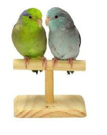 ○【三晃商会】小鳥のT型ローパーチ B31