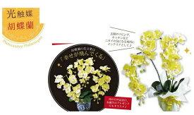 【大感謝価格 】磁器の鉢に入った胡蝶蘭 光触媒 金運の黄色