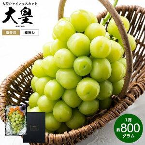 大皇(おおすめら) シャインマスカット 約800g(お届け:9月下旬以降)送料無料 / 兵庫県産 葡萄 ブドウ ぶどう 高級 フルーツ ギフト 期間限定
