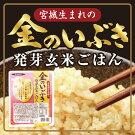 ラドファ金のいぶき発芽玄米ごはん(150g×12個入り)