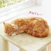 PEPPY(ペピイ)キャットスクラッチポール【送料無料】【キャットタワー猫タワー据え置き多頭爪とぎスクラッチポールペットグッズ麻猫猫用品猫用】