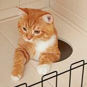 ウッディーキャットルーム【猫キャットタワー猫タワー据え置きハウスペットおしゃれインテリアトイレドア扉ハンモック】PEPPY(ペピイ)
