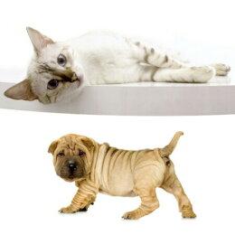 【犬猫コンディショナー】グリスヘアーコンディショナー250ml【しっとり仕上げ用】ココナッツの香り(バイオガンスBIOGANCEシャンプートリートメントコンディショナーケア用品抜け毛消臭いぬイヌねこネコ犬用品猫用品ペットペットグッズペット用品)