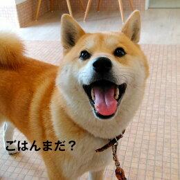 魚のEPA、DHAで賢く!痴呆症予防!「グリーンフィッシュ」(GreenFish)犬ドライフード中粒7.5kg【無添加】(犬いぬ犬用品犬用フード犬のえさプレミアムフードペットペット用品餌エサえさごはん子犬成犬シニア高齢犬目やに目ヤニ涙やけ涙ヤケアレルギー)