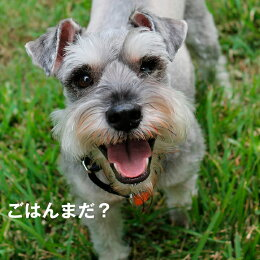 魚のEPA、DHAで賢く!痴呆症予防!「グリーンフィッシュ」(GreenFish)犬ドライフード中粒12kg【無添加】(犬いぬ犬用品犬用フード犬のえさプレミアムフードペットペット用品餌エサえさごはん子犬成犬シニア高齢犬目やに目ヤニ涙やけ涙ヤケアレルギー)