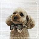 【Dogo Dog ドゴドッグ】EasyBOW Gentleman Brown / イージーボウ ジェントルマン ブラウンリボン