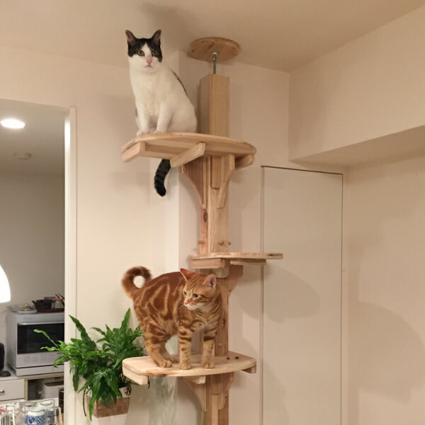 Products Cedar Cat Cat Tower Prop Wood Thatu0027s Domestic Natural Wood Cheap  Slim Stylish Pet Products Cat Handmade Cat Tower Cat Tree Catwalk Cat  Exercise ...