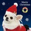 ペットパラダイスなりきりペッツサンタ帽子【小型犬】犬服クリスマスX'masサンタコスプレ犬服犬の服犬服ペットウエアペットウェアドッグウェアベビー超小型犬小型犬