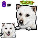 送料無料 犬 ステッカー 北海道犬 マグネット グッズ 雑貨 車に貼る 防水 耐水 犬 ステッカー 肉球 犬のステッカー カ…