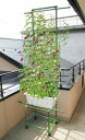 ■園芸用品■緑のカーテンワゴンW80cm