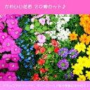 ■新鮮花壇苗■かわいい花苗おまかせ20個セット5種×4個ずつ