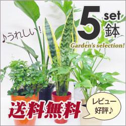 再販決定!5号鉢も入ってこの価格!【送料無料】■観葉植物■観葉植物おまかせ5鉢セット!
