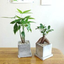 ■観葉植物■2鉢えらべるsetミニ観葉セット□8cmスクエア 石材風陶器鉢植え 受け皿つき