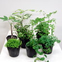 ■観葉植物■ミニ観葉お好み3個セット