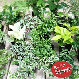 ■観葉植物■ミニ観葉お好み5個セット