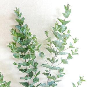 ■良品庭木■ネイティブプランツユーカリ ムーンラグーン10.5cmポット苗