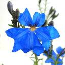 ■良品庭木■ネイティブプランツNEW!!レシュノルティアコバルトブルー3号ポット苗