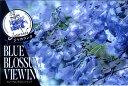■季節の花木■再入荷!ジャカランダブルーブロッサムビューイング5号ポット接木苗