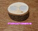 皿木【16g 2穴】