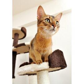 猫ちゃんがくつろげる、猫タワー